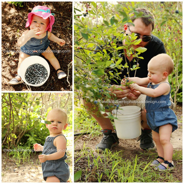 Moorhead's Blueberry Farm Photographer Conroe, TX