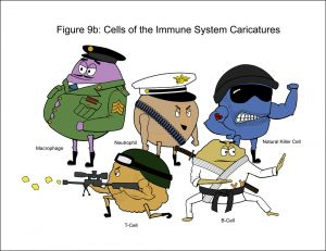 c89-Fig 9b Cells Caricature_C-Website.jpg